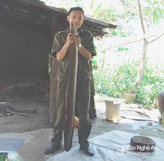 Bắt được cá chình được cho là 'khủng' kỷ lục ở Nghệ An