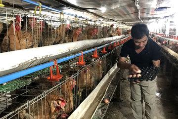 Độc chiêu hiếm có Việt Nam, lão nông thu lãi 1,5 tỷ/tháng