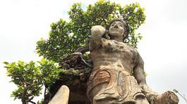 Xôn xao 'cây Thạch Sanh' được báo giá hơn 4 tỷ ở Hải Dương