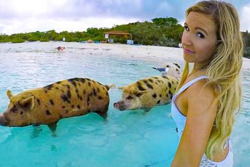 Đàn lợn nổi tiếng 'tấn công' dàn mỹ nhân xinh đẹp