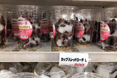 Ghê sợ con gián: Nhật đóng hộp bán giá đắt, Việt Nam đốt tiêu hủy