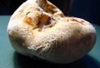 Bí ẩn loài nấm phục linh đắt hơn vàng ròng