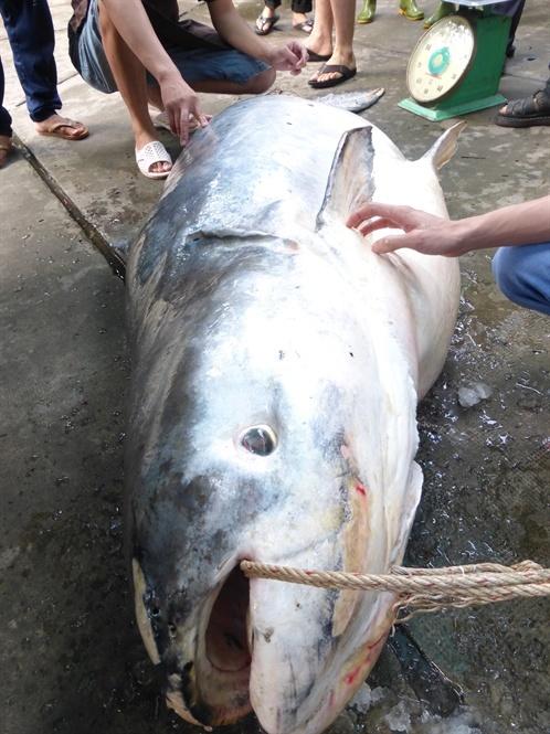 'Thủy quái' Vàm Nao và giai thoại loài cá giá bán chục cây vàng