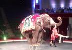 Tiết mục xiếc voi sẽ không còn xuất hiện trong rạp xiếc?