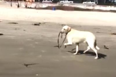 Những khoảnh khắc hài hước khi thú cưng lần đầu đi biển
