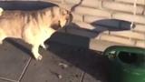 """Sai lầm """"chết người"""" làm chú chó uống mãi không đỡ khát"""