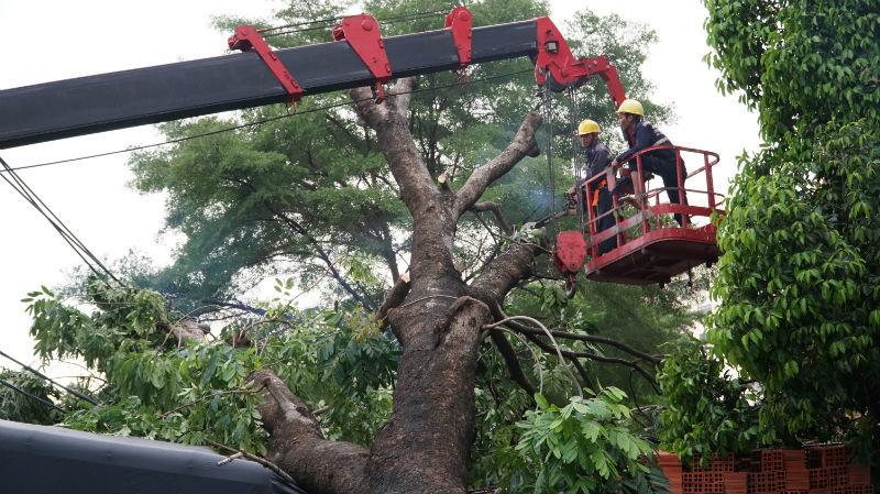 Xà cừ bật gốc đè xe tải, kéo gãy trụ điện trong mưa ở Sài Gòn