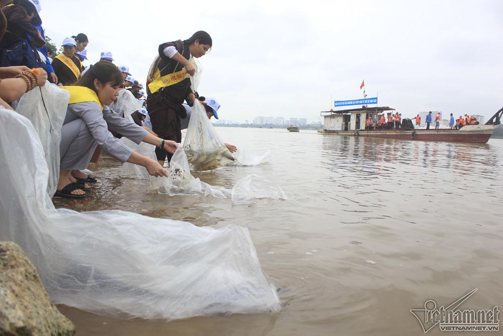 phóng sinh,phóng sinh cá,Hà Nội