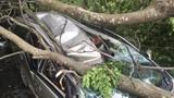 Cây ngã đè bẹp dúm ô tô, tài xế kêu cứu thảm thiết