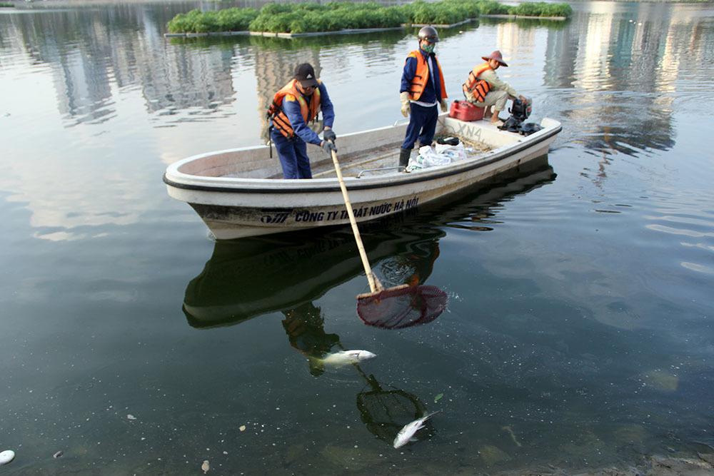 Hà Nội: Cá chết nổi la liệt mặt hồ, vớt mỏi tay cả ngày