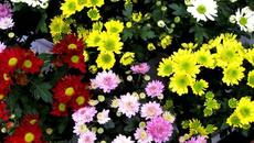 10 loại cây cảnh trồng trong nhà vừa đẹp vừa giúp lọc không khí cực tốt