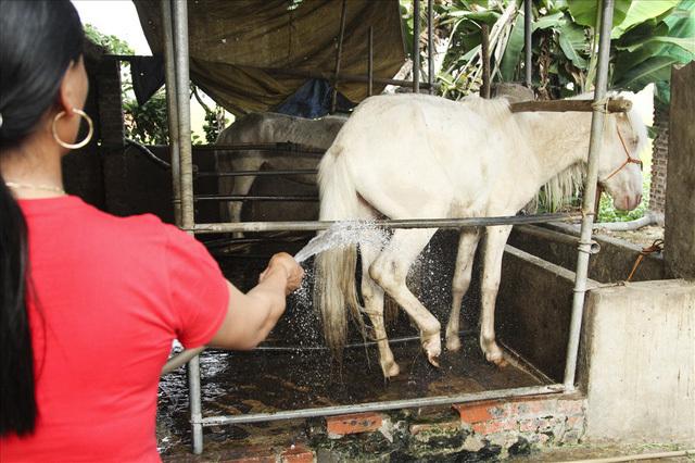 Đại gia làng Phẩm: Bán con bạch mã mua ô tô Camry