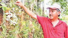 Tay chơi bậc nhất: Vườn lan rừng nhất Việt Nam, thuyền độc mộc lớn chưa từng có