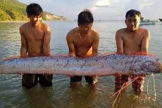 Cá hố rồng dài gần 4m liên tục dạt biển Hà Tĩnh