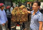 Tin đồn vải 10 ngàn/kg: Chỉ có ăn quả sâu, quả còi hạng bét