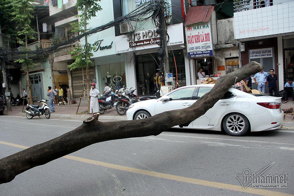 cây đổ,Hà Nội
