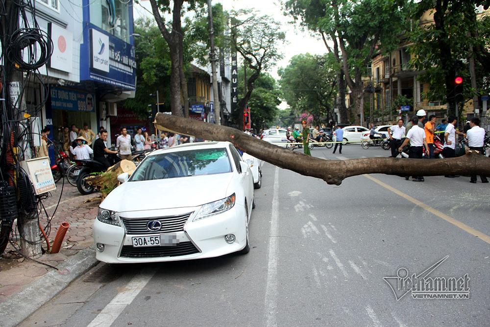 Cây phượng già đổ đè nát xe Lexus trên phố Hà Nội