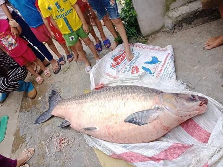 cá trắm đen,cá khủng,cá trắm,thủy quái sông Đà