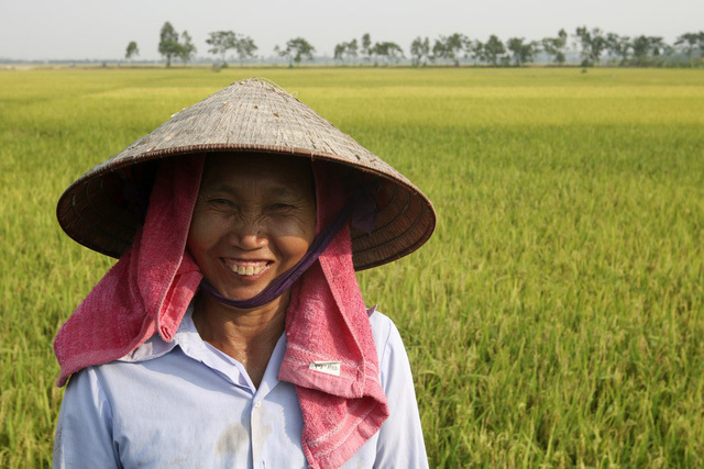 Đồng lúa,Hà Nội,Nông dân