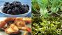 4 thực phẩm trong vườn nhà chống nhiễm trùng cực tốt