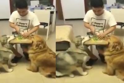 """Hai chú chó """"nâng"""" thớt cho ông chủ thái hành"""