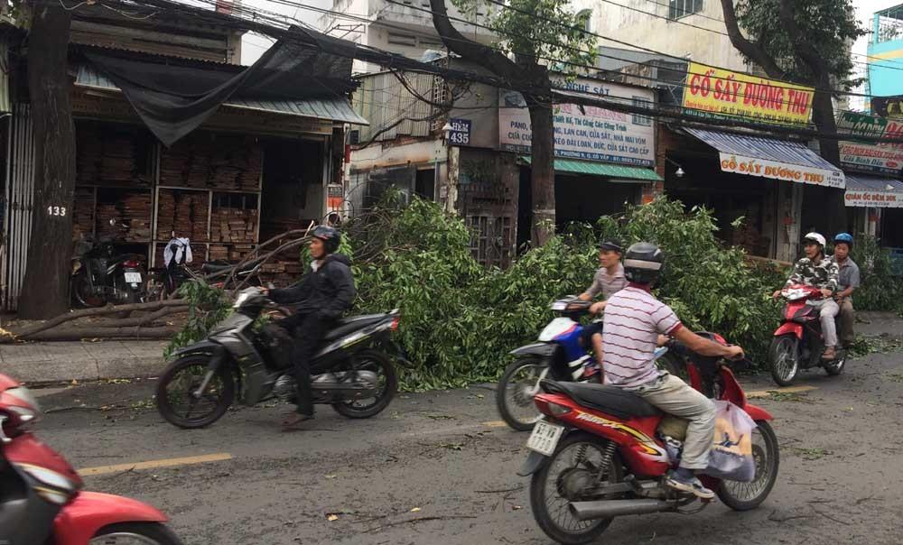 cuồng phong,giông lốc,Sài Gòn,cây xanh ngã