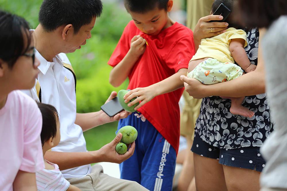 Chuyện lạ Hà Thành: Dân phố kéo ra vỉa hè mở hội hái xoài