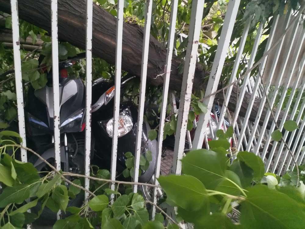 Gió giật cổ thụ bật gốc đè bẹp hàng loạt xe máy ở Sài Gòn