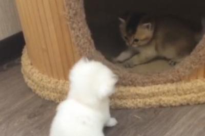 Cả thế giới thu gọn lại bằng hai chú mèo đáng yêu này