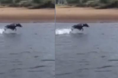 """Chú chó có khả năng """"bay"""" trên mặt nước"""