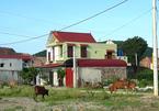 Thanh Hóa: Bí thư xã bị cấm khỏi nơi cư trú