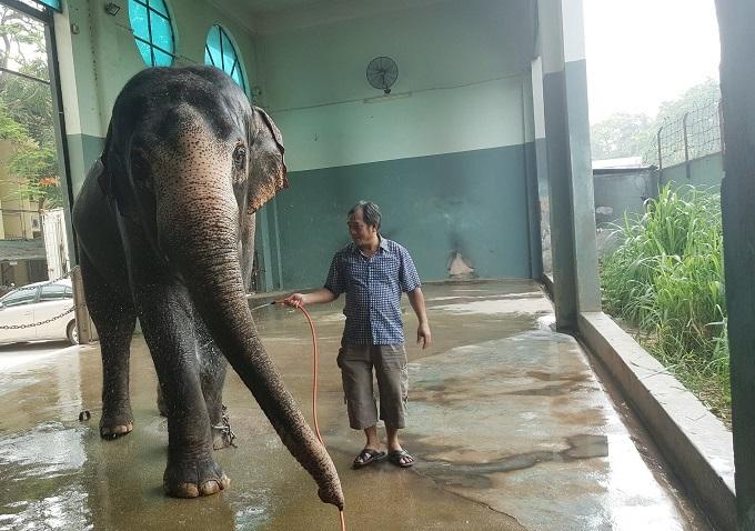 Liên đoàn Xiếc Việt Nam,Động vật hoang dã