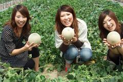 Du khách thích thú thăm vườn dưa lưới ở Nhật Bản