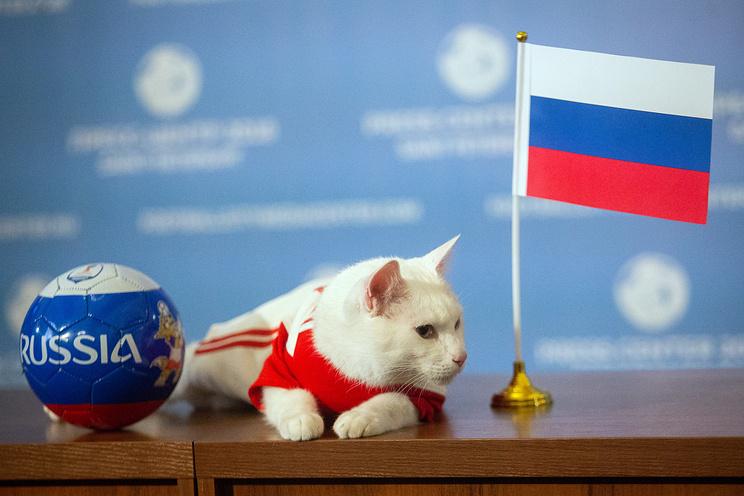 Mèo 'tiên tri' chọn Nga thắng Saudi Arabia khai mạc World Cup 2018