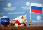 """Mèo """"tiên tri"""" chọn Nga thắng Saudi Arabia khai mạc World Cup 2018"""