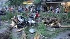 Cây đổ đè 5 người trên phố Quán Sứ, 2 người bị thương nặng