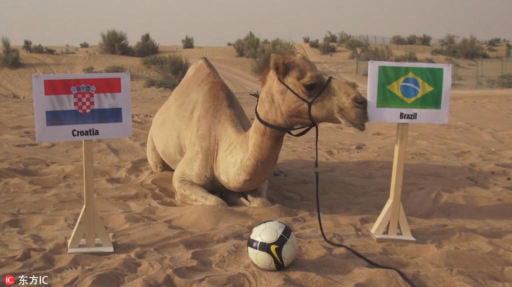 Những 'nhà tiên tri' từng dự đoán đúng kết quả World Cup