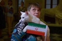 Mèo Achiles dự đoán Iran thắng Maroc 22h tối nay