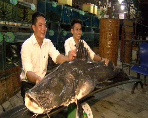 dứa Đài Loan,quả dứa,nước ép dứa,bia cỏ,bia ngoại nhập,World Cup,tour đi Nga,cá lăng,cây sanh cổ