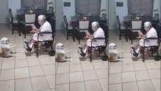 Chó nhảy múa minh họa cho chủ hát