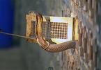 Nơi rắn nhiều hơn người ở Việt Nam: Mới nghe đã kinh sợ