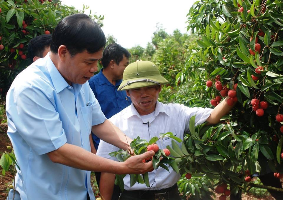 vải thiều,vải thiều lục ngạn,bộ trưởng Nguyễn Xuân Cường