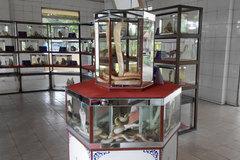 Rùng mình rắn hổ mang chúa dài 4 mét ở công viên mãng xà độc nhất Việt Nam