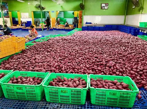 MM Mega Market tham vọng đưa nông sản Việt sang Thái