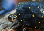 Tiếp viên hàng không buôn lậu hàng chục con rùa trị giá gần 1 tỷ