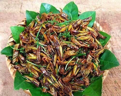 Kinh dị, 'ngã bổ ngửa' với những đặc sản côn trùng vùng cao Tây Bắc