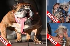 Ngắm những con chó xấu xí nhất thế giới