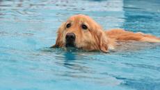 Khi bạn quá nôn nóng gặp người yêu nhưng lại không biết bơi