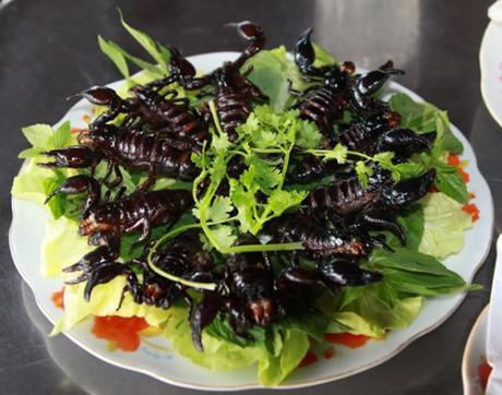 Đặc sản 'độc' bọ xít khả năng 'soán ngôi' bọ cạp