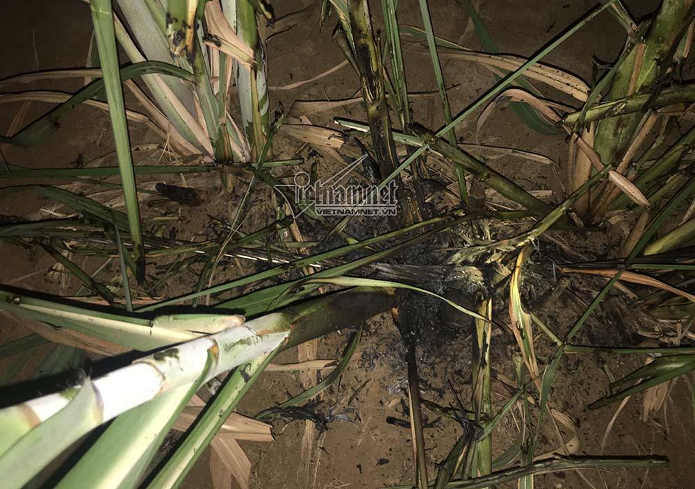 Nguyên nhân 4 người bị điện giật cháy sém trong đêm
